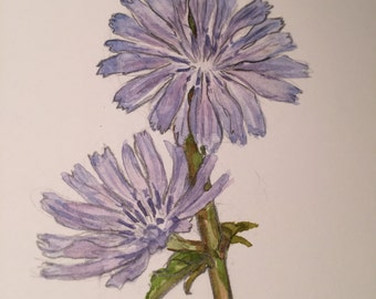 Chicory Original painting by Renae Taylor