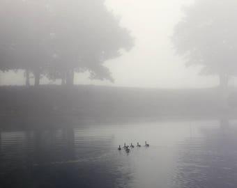 Gallery Wrap, ducks lake water fog mist bathroom decor office decor landscape photography home decor