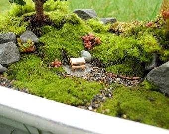 LIVE MOSS for Miniature Gardens, Moss Garden, Terrariums, Fairy Gardens or Garden Crafts, Harvested Eco-Friendly, 3 Different Kinds of Moss
