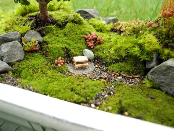 LIVE MOSS For Miniature Gardens, Moss Garden, Terrariums, Fairy Gardens Or  Garden Crafts, Harvested Eco Friendly, 3 Different Kinds Of Moss From Janit  On ...