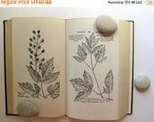 Mothers Day Sale - Beautiful Vintage Field Book of American Wild Flowers, 1927, Black and White Illustrations Throughout