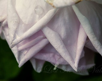 Floral Print, Nature Photography, Wall Art, Photo of a Rose, Summer Picture, Flower Photograph, Bloom, Garden, Petals, Pink, Green, Black