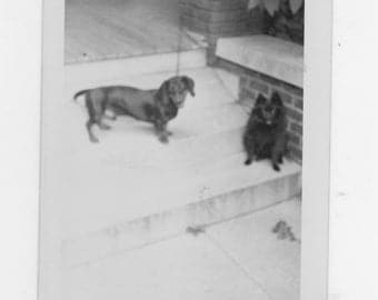 original 1940-50s black and white photo. of a two dogs