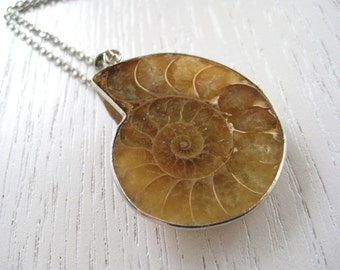 Lovely Caramel Brown Ammonite Fossil Pendant