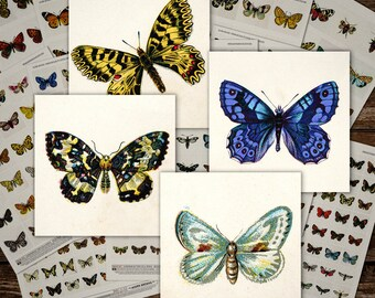 11 Sheets! - European Butterfly & Moth Mega-Pack Digital Collage Sheets