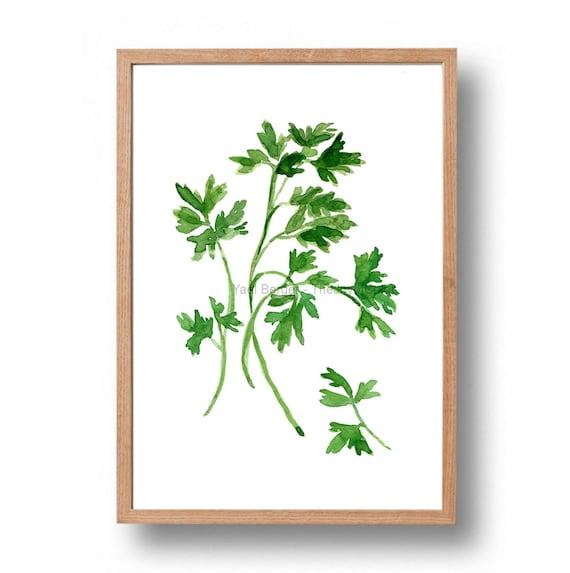 Parsley art Print ,print of watercolor, herb art, botanical print, green, Parsley print, minimalist art, kitchen art, foodie gift