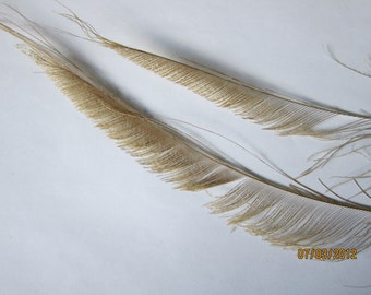 2 Peacock Feather Swords Bleached Beige - stems cut to 10-12""