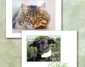 Pet Stationery, Custom Made With Your Photo, Personalized Pet Cards, Cat, Dog, Horse Note Cards, Made To Order, Kitty Doggie Puppy Pony
