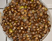 White Oak Acorns 10 lb Deer Squirrel Turkey Bait Food Crafts Fresh