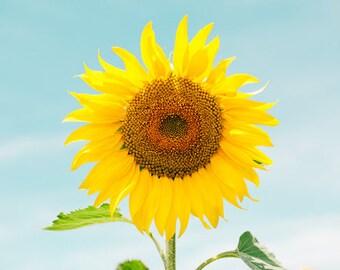 Sunflower Print, Flower Art, Floral Print, Nature Photography, Minimalist Print, Minimalist Bedroom Ideas, Nature Images, Summer Print