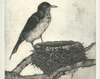 American Robin at Nest, Original Aquatint Etching