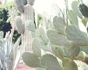 "Cactus Wall Art, Cactus Art Print, California Desert, Desert Home Decor, Sage Green, Desert Travel, Cactus Home Decor ""California Cacti"""