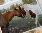 Horse Love Photo Note Card. Equine Photography in Rural Montana.