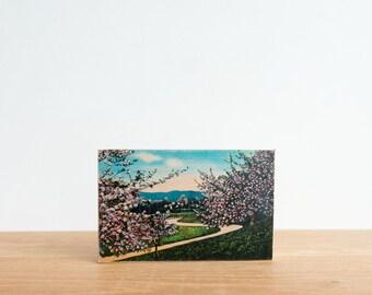 Americana Vintage Postcard Art Block 'Springtime in the Mountains' - South Carolina, cherry blossoms, spring drive, retro postcard