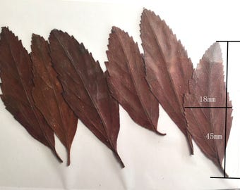 1 Pack (6 stems) Pressed Real  Dry Guava  Leaf