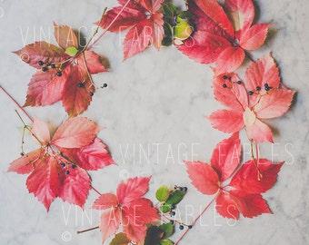 Styled Desktop, Fall Mockup, Social Media Photo, Instagram, Fall Leaves Photo, Styled Stock Photography, Mockups, Fall Wedding Invitations