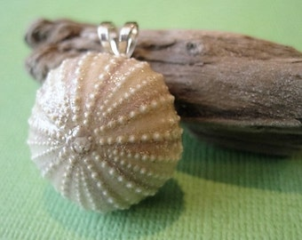Pink and Green Genuine Sea Urchin Shell Pendant, Sea Urchin Pendant No. 2