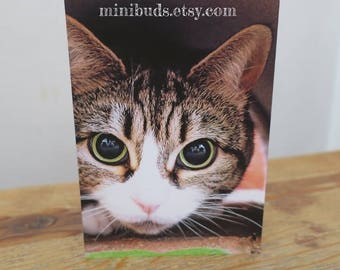 Tabby Cat wide eyed photo greeting card. Blank photographic Birthday Card. Cat card. FamilyCat cards by Minibuds