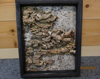 Framed Birch Bark