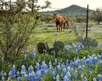 Quintessential Texas