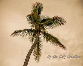 Palm Tree, Nature Photography, Glossy, Fine Art Photography, 8x10, Matted, Tropical