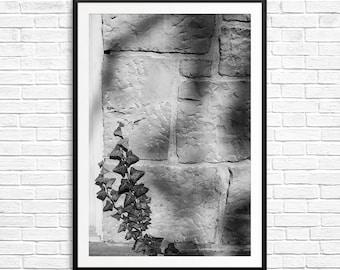 Ivy photography, garden art, black and white, B&W photos, shadow and light, fine art photos, black and white art, black and white prints