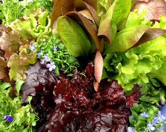 Gourmet Salad Collection, Lettuce Mix Seed, Nasturtium Seeds, 3 Heirloom Seed Varieties, Great for Container Gardens