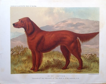 IRISH Red SETTER ANTIQUE Chromolithograph Dog Print 1881 by Vero Shaw Cassells and Company Christmas thanksgiving Birthday dog lover gift
