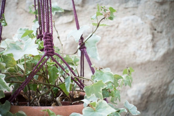 Purple plant hanger
