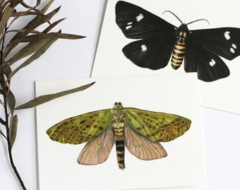 NZ Puriri Moth illustrated greeting card