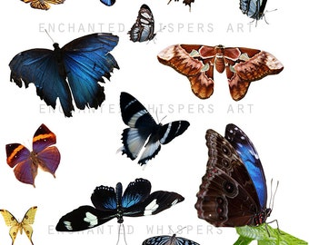 butterfly overlays, Instant download, butterfly PNG, butterfly clip art, real butterflies, digital butterflies, photography butterflies