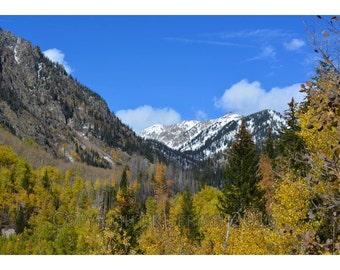 Fall Foliage: Handmade Photography Card (set of 5)