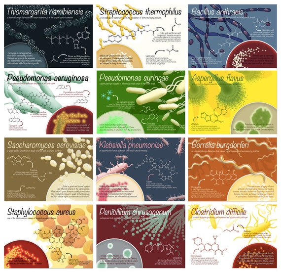 Set of 12 microbiology postcards - Microbes and Molecules sciart card set featuring bacteria and fungi - gift for scientist