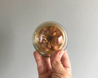 Glass Dried Flower Paperweight / Dried Flower Paperweight