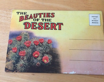 Vintage Beauties of the Desert Postcard Folio