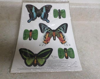 Current Inc. Natural Wonders Butterfly Punch Outs
