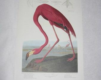 Audubon print unframed bird American Flamingo reproduction