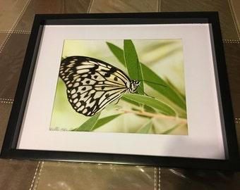 Butterfly, on leaf, fine art, Photo print