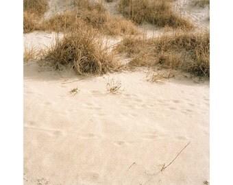 Beach Imprints (7)
