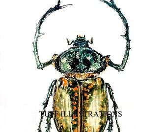 Beetle watercolor painting-Cheirotonus gestroi