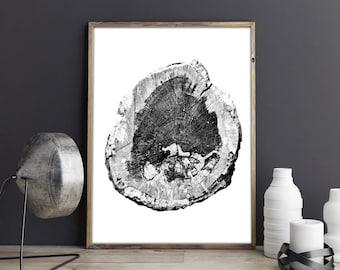 Woodcut Black and White Photograph, PRINTABLE, English Oak Tree, Printable art, 11.7 x 16.5 in. Tree Rings, Tree stump, English, log slice