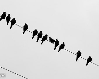 Birds on a wire, Black and White, Fine Art Photography, Instant Download, High Resolution, Decor, Birds, Nature, Minimalism,