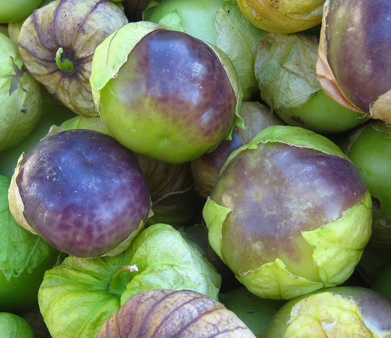 Purple Blush Tomatillo