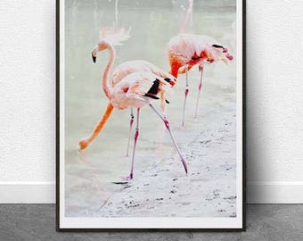 Flamingo, DIGITAL Download, Photography, Wall Art, Home Decor, Printable Wall Art, 11x14 inch File, Instant Download