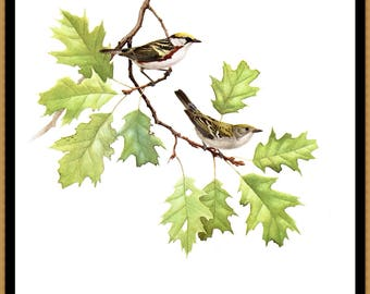 """The Chestnut-sided Warbler paint by J F Landsdown for the book Birds of the EAstern Forest 2. The page is approx. 9 1/2"""" wide and 13"""" tall."""