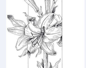 Lily Flower Ink Drawing - A4 and A5 Prints