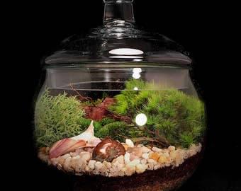 Moss Terrarium, Beach Terrarium, Beach Decor, Terrarium, Terrarium Gift, Beach Decor, Beach House Decor, Beach House Gift, Zen Terrarium