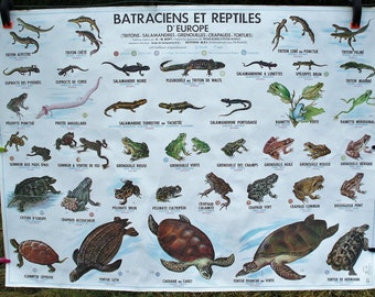 "School poster ""Reptiles of France and Batrachians and reptiles of Europe"" year 1978"