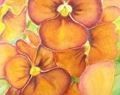 Pansy, watercolor, original, orange, ooak, 26x36 cm./10x14 inc., gift idea, wall art, home decoration, bedroom, living room, birthday.
