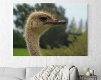 Ostrich Wall Art, Wildlife Photography, Print, Canvas, Bird Photography, Nature Photo, Wildlife Wall Art, Bird Wall Art, Ostrich Photo, Bird
